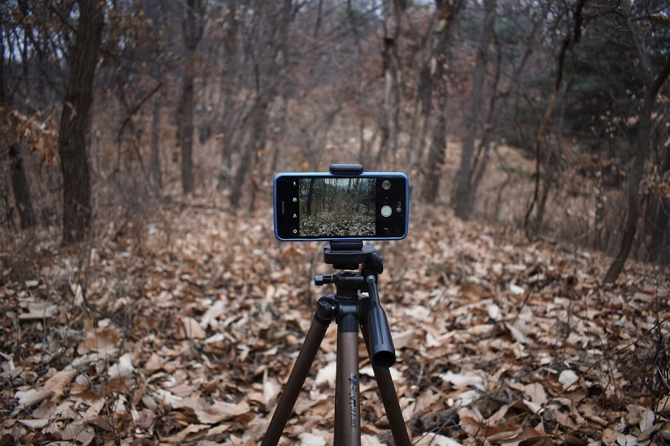 smarphone livestream with tripod in forrest with fallen leaves